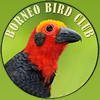 Borneo Bird Images logo