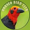 Borneo Bird Images logo